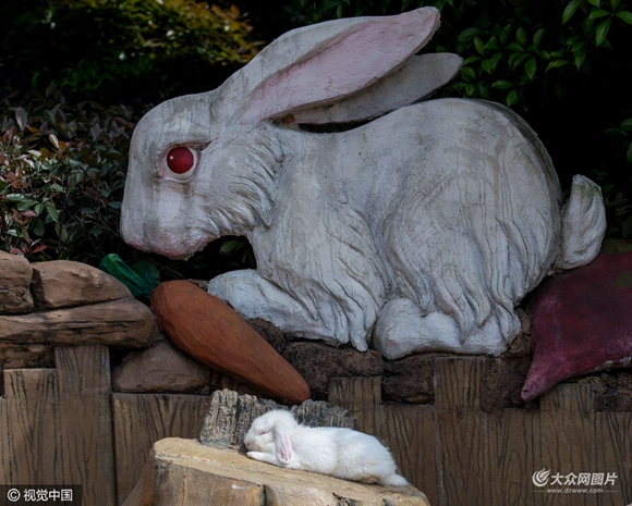 世界睡眠日:动物界睡姿大比拼