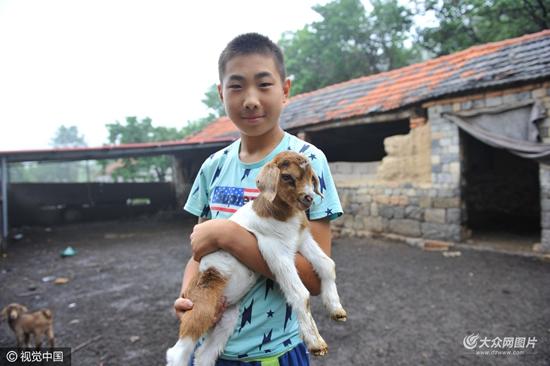 这些可爱的小羊羔成了他暑假里小伙伴.图片