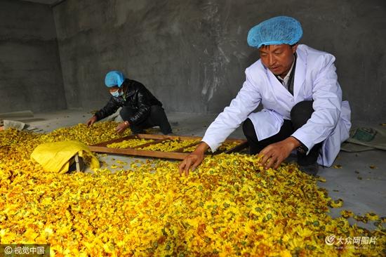 农民工创业项目_日照农民工返乡创业 种出\