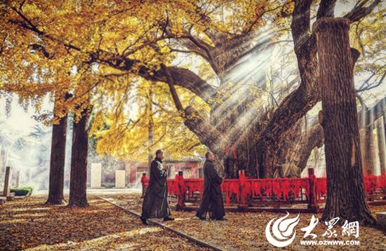 """它就是日照市莒县浮来山风景区内具有""""活化石""""之称的""""天下银杏第一树"""""""