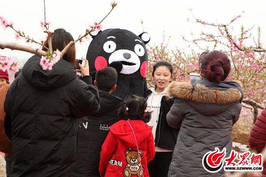 """在这片桃花2""""熊本熊""""与游客们合影海中,记者发现,分别有两个人偶""""熊本"""