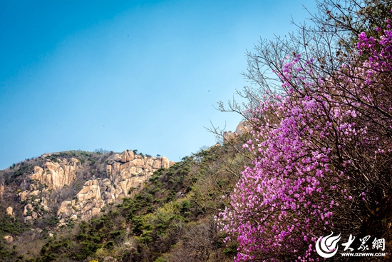 五莲九仙山风景区邀您来赏花