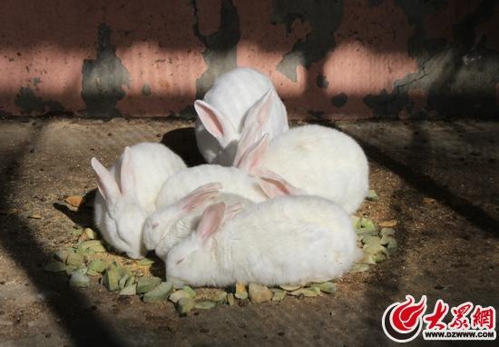 壁纸 动物 兔子 550_382