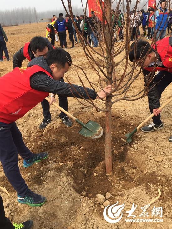 迟艳芳)3月12日植树节当天, 莱商银行日照分行森林志愿者与日照金融