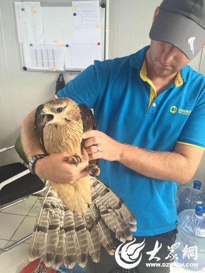 日照市野生动物救助站救助国家二级保护动物