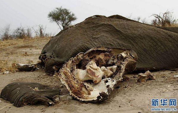 非洲吃野生动物