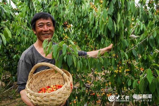 (1)眼看着樱桃产业开华结果,摘着樱桃的郝瑞书心里说不出来的畅快。.JPG