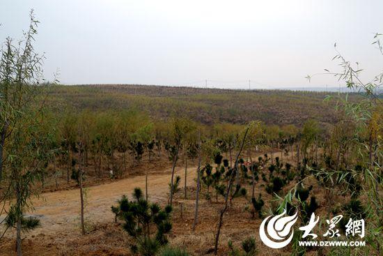 1、弘丰生态林位于大面积土地流转