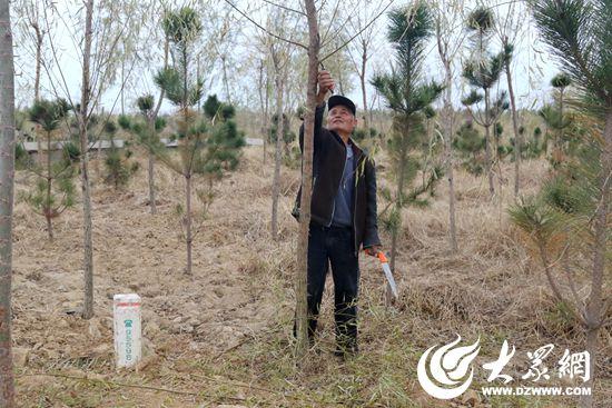 3、何子京正在园内忙着修剪树枝的工作