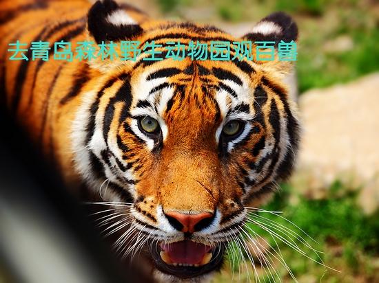 青岛森林野生动物园简介